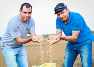 Turvo debate as inovações para produção de arroz em SC