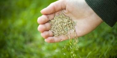 Produtor rural de Forquilhinha podem retirar autorização de pastagem de inverno