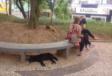 Projeto é debatido para reduzir animais nas ruas do Rincão