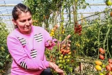 Com incentivos, agricultores familiares permanecem no campo