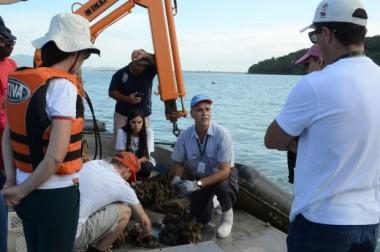 Epagri oferece curso gratuito de cultivo mecanizado de mexilhões
