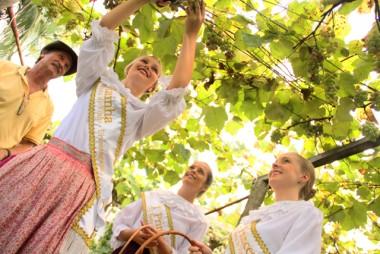 Evento enaltecerá 120 anos do cultivo da uva Goethe