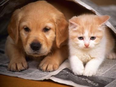 Amigo Bicho promove o primeiro Mutirão de Castração de Cães e Gatos do ano