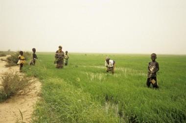 Você pode contribuir para melhorar a qualidade de vida em Senegal