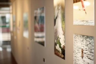 """Mostra fotográfica """"Expedição Natureza - Tocantins"""""""