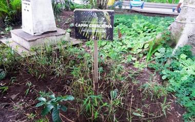 Capim Cresciúma será plantado em escolas, praças e parques