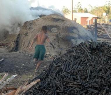 Cai produção de carvão vegetal, lenha e madeira em tora do extrativismo