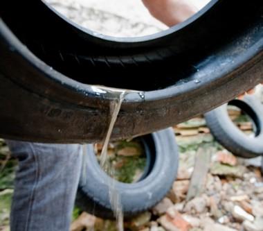 Saúde reforça a importância da eliminação de criadouros do Aedes aegypti