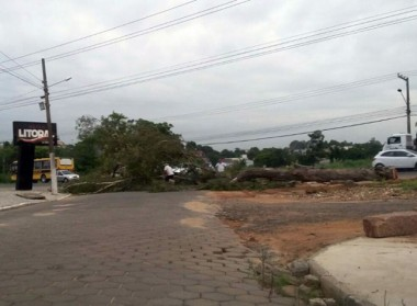 Árvore bloqueia SC-445 no Raichaski em Içara