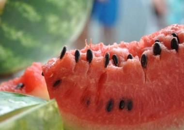 Colheita da melancia inicia com frutas mais doces