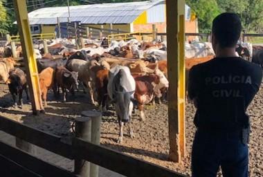 Polícia Civil e Cidasc realizam operação contra furto de gados