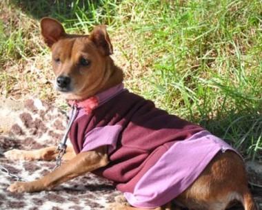 Oportunidade de castração de cães e gatos ocorre sábado