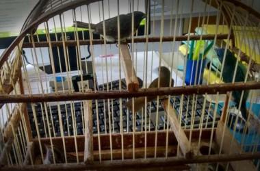 Fundai recebe espontaneamente quatro pássaros silvestres