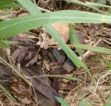 Ossada humana é encontrada em plantação de bananas