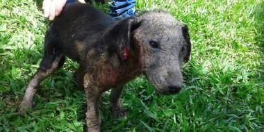 Contribua para salvar mais animais abandonados em Içara