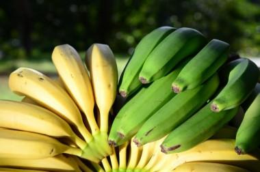 Estiagem pode impactar produção de banana em SC