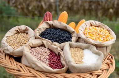 Estiagem traz risco para safra catarinense de grãos