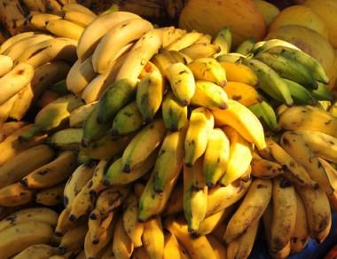 Santa Catarina registra exportação recorde de banana