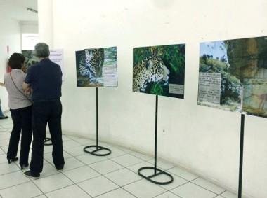 Tubarão recebe a exposição 'Onça: Mito, simbologia e Sentido'