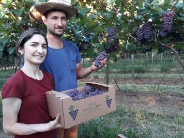 Casal é pioneiro na plantação de uvas em Içara