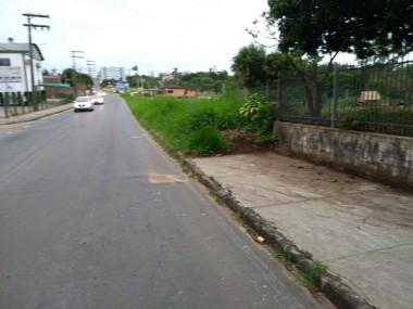 Vegetação invade calçadas na Rua Sete de Setembro