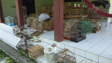Polícia Ambiental apreende 56 aves no Bairro Santa Cruz em Içara