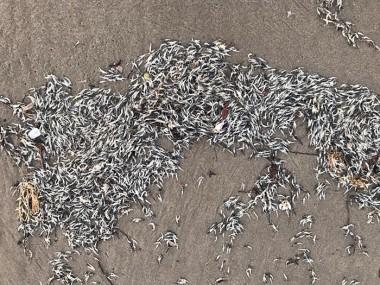 Larvas de camarão são achadas em Rincão