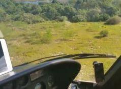 Plantação de maconha é encontrada na lagoa do Jacaré