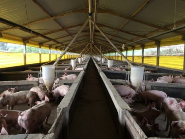 SC embarca segundo lote de carne suína para Coreia do Sul