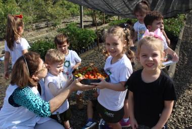 Alunos do infantil colhem tomatinhos na horta da Satc