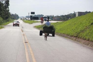 Trafegar com animais de carga na BR-101 Sul precisa seguir o CTB