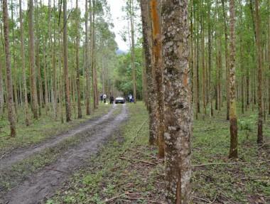 Epagri e Siderópolis oferecem curso para tratamento de madeira