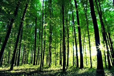 Unesc lança grupo de estudos voltado para a Educação Ambiental