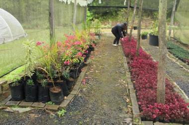 Horto Florestal de Içara distribui mudas e recebe visitas