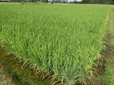 Epagri comemora 25 anos em bom momento do setor agropecuário