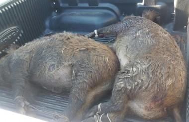 Polícia Militar prende caçadores e apreende armas em Maracajá