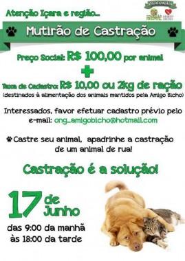 Mutirão de castração de cães e gatos neste sábado a preço de custo