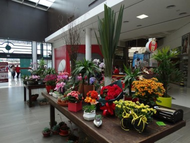 Flores e plantas em destaque no Festival de Primavera
