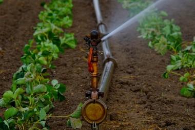 Aprenda na Unisul técnica para irrigar a sua lavoura