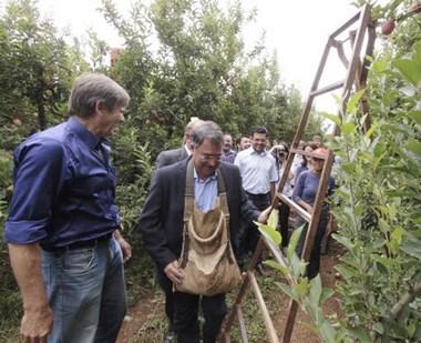 Colombo participa da abertura oficial da colheita da maçã