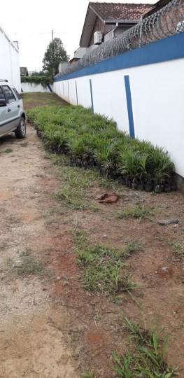 Projeto de compensação ambiental é aplicado em Cocal do Sul